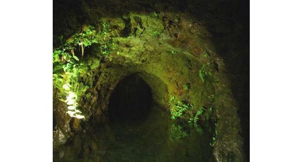 蔵の井戸。小澤酒造では豊富な湧き水を使用