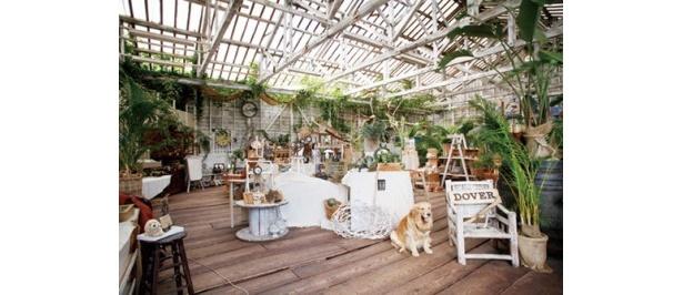 壁や天井に緑が茂る。自然との一体感がテーマの店内には、地元在住の約20名の手作り作家の作品が並ぶ