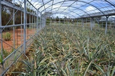有機肥料で大事に育てる