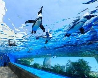 """サンシャイン水族館の楽しみ方を徹底ガイド!""""天空のペンギン""""やおすすめのお土産情報を紹介"""
