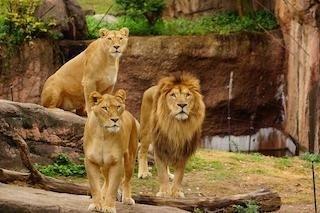 天王寺動物園の楽しみ方&回り方を紹介! 動物たちが暮らす大阪都心部のオアシス