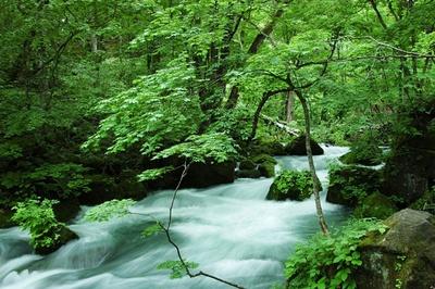 緑の森が広がる渓流沿いを滝や急流を見ながら散策