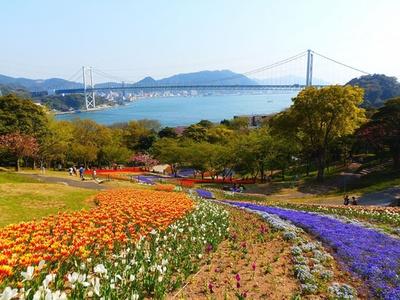 色鮮やかな絨毯のように花が咲き誇る