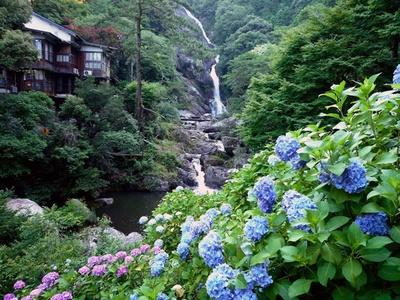 青や紫のアジサイが滝を華やかに演出