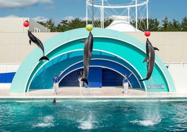 3頭のイルカたちが息ぴったりのジャンプを披露