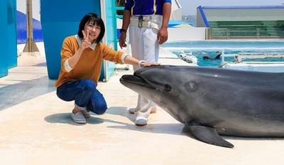 イルカにタッチできる貴重な体験も。思い出づくりにぴったり
