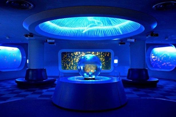 常時14種ほどのクラゲを楽しめる幻想的な空間