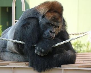 名古屋市東山動植物園の楽しみ方&攻略法!1日では遊び切れない魅力が盛りだくさん