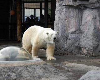 旭川市旭山動物園の見どころを徹底紹介!唯一無二の展示で大人気