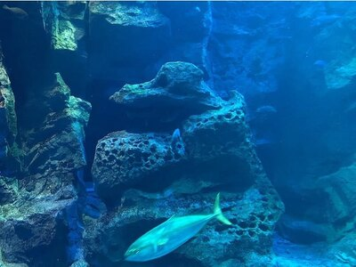 水槽の中には、男鹿にある奇岩「ゴジラ岩」のレプリカも