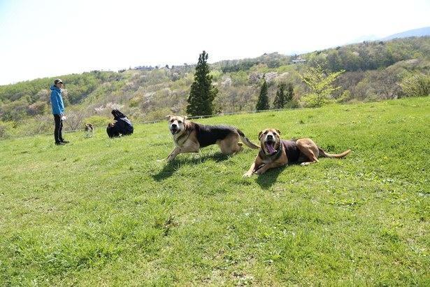 広大な土地に愛犬も大興奮!
