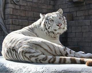 東武動物公園の楽しみ方をガイド!一日遊べるハイブリッドレジャーランド