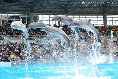 イルカ、クジラたちによるパフォーマンス「マリンライブ」は必見!