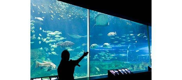 生物や水槽の特徴を説明する「大水槽解説」