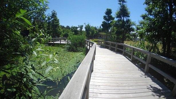 新潟市の淡水域の自然環境を再現した「にいがたフィールド」