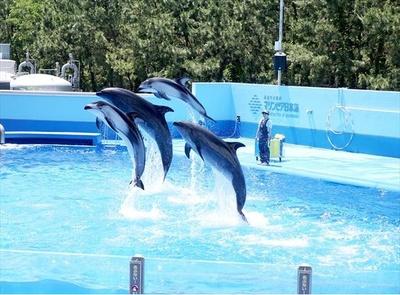 迫力のショーを通してイルカの生態が学べる