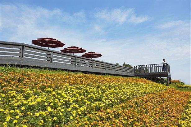 湯沢高原パノラマパークの楽しみ方を一挙紹介