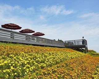 湯沢高原パノラマパーク アルプの里の楽しみ方!標高1000メートルの別世界にはパノラマ足湯や極上クレープも