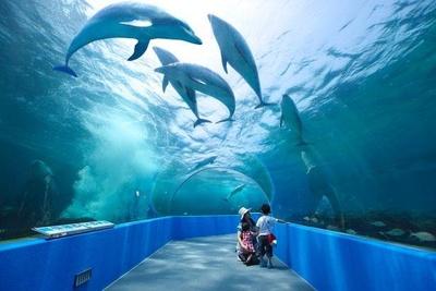 日本最大級のトンネル水槽。ペンギンの巣穴観察窓など、楽しい仕掛けも組み込まれている