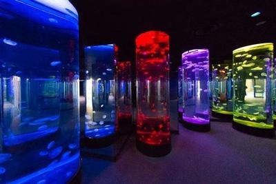 幻想的な空間でクラゲを展示する「クラゲの光アート」