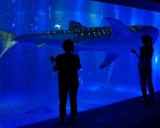 のとじま水族館の楽しみ方ガイド!日本海側で唯一のジンベエザメなど見どころ満載