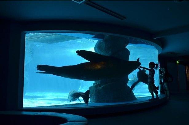 1階からは水中を優雅に泳ぐシーンも見ることができる