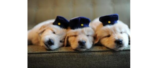 """""""犬のおまわりさん""""な、可愛いすぎる寝顔!癒されます"""