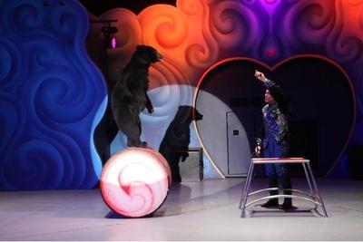 クマのあかりちゃん、オウムのプルートなどがトレーナーたちと華麗な技を披露