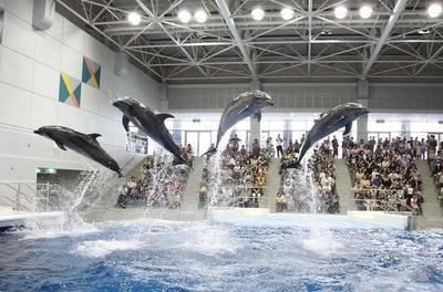 イルカプールで開催される「いるかの時間」では多彩な実験を開催