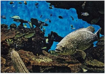 熱帯・亜熱帯性魚類とサンゴ類を展示する「南西諸島の海」
