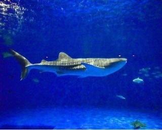 いおワールドかごしま水族館は九州最大級!施設の見どころを紹介