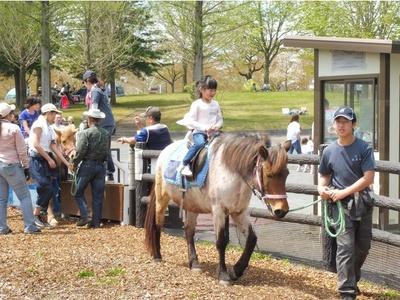 わんぱくゾーンで楽しめる「ポニーの乗馬」は中学生以上330円、小学生以下220円