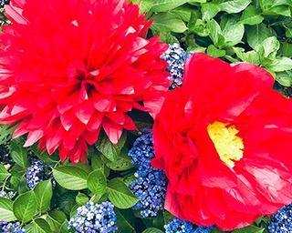 【夏の自由工作】インパクト抜群!お花紙でジャイアントペーパーフラワーを作る【小学校中学年】