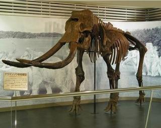 倉敷市立自然史博物館の見どころをチェック!生物や地学の好奇心を育もう