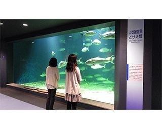 日本で3番目に古い歴史を持つ水族館!京都大学白浜水族館の無脊椎動物は日本随一のコレクション