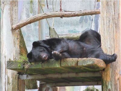 """【写真】バットを華麗に回す技を持つ、""""カンフー熊""""ことクマのクラウド君"""