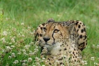 広島市安佐動物公園で生き生きとした動物たちを観察!おすすめ&見どころを紹介