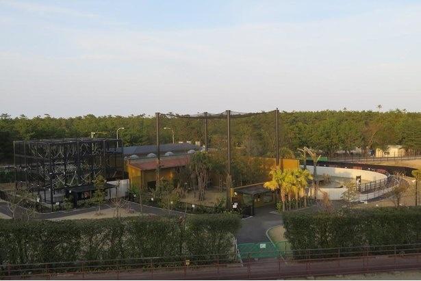 チンパンジーの生態と保全に配慮した展示をする「チンパンジーの森」