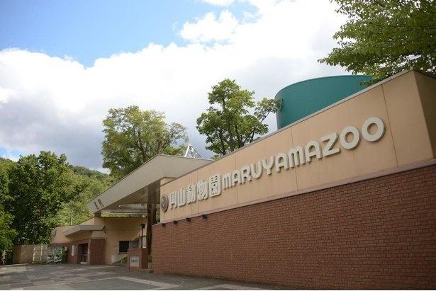 1951年のこどもの日(5月5日)に、北海道で初めての動物園として開園
