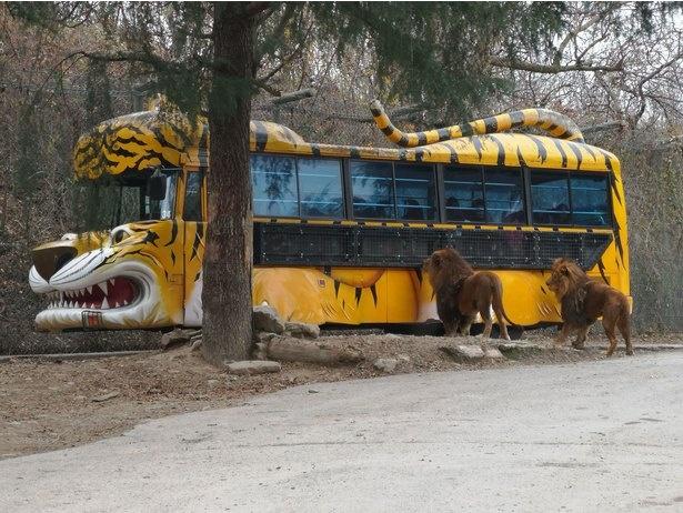 迫力満点のエサやり体験バス