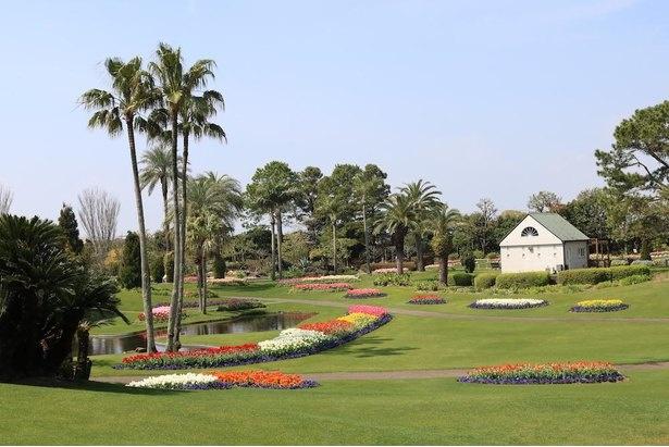 約6000平方メートルの広さがある園内中央の芝生広場