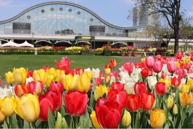 「春のフローラル祭」と「秋のフローラル祭」では、寄せ植え体験なども実施