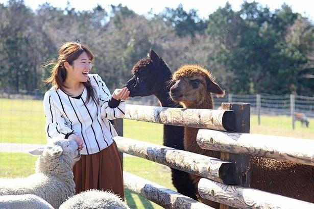マザー牧場では、たくさんの動物たちと触れ合える