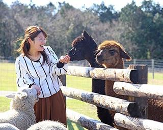 マザー牧場で牛や馬などの動物たちと触れ合おう!おいしい牧場グルメなどの楽しみ方も紹介