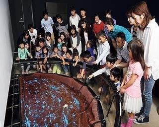 体験型展示や発光ショーなど見どころ満載!ほたるいかミュージアムの楽しみ方を紹介