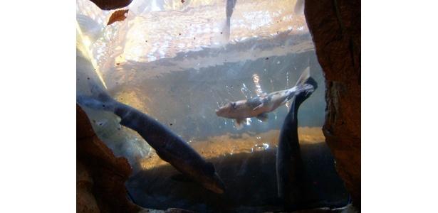 入り口の天井をぜひ見て!泳ぐ魚を見上げる絶景ポイントだ