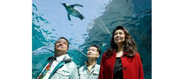 マキノ雅彦監督、西田敏行主演『旭山動物園物語 ペンギンが空をとぶ』
