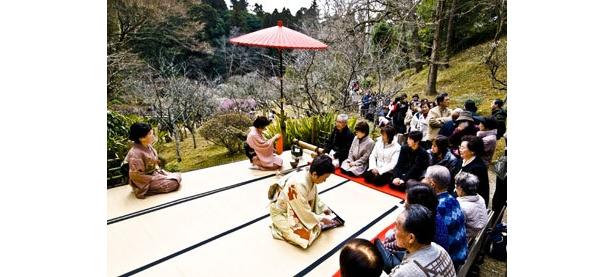 成田山公園では野点などのイベントも