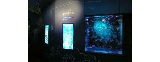 約4種類100匹のクラゲを見ることができる