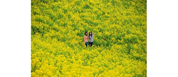 菜の花に囲まれて記念撮影!